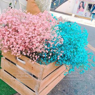 木製ベンチの花の写真・画像素材[921578]