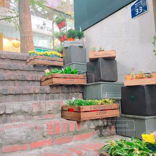階段際の花の写真・画像素材[921582]