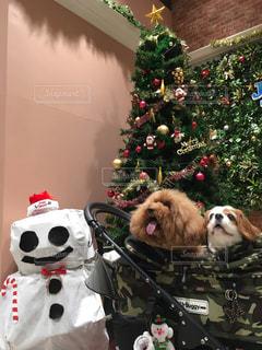 クリスマス ツリーの横に座っているぬいぐるみの動物のグループ - No.928986