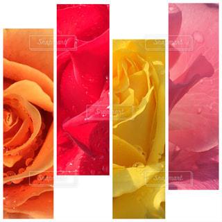 バラのコラージュの写真・画像素材[921783]