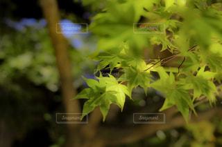 近くの緑の植物を - No.921784