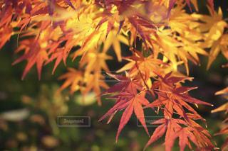 植物の木の成長の写真・画像素材[921800]