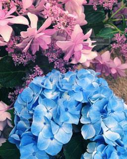 近くの花のアップの写真・画像素材[921860]