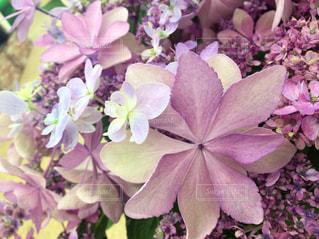 植物の紫色の花の写真・画像素材[921861]