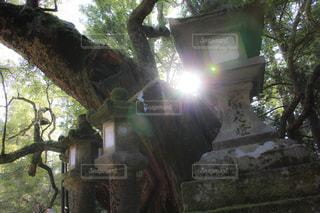 灯篭と大樹の写真・画像素材[921874]