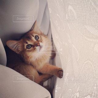 ベッドの上に座っている猫の写真・画像素材[921880]