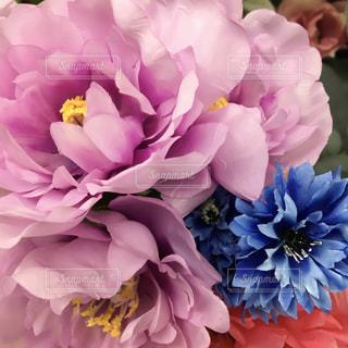 近くの花のアップの写真・画像素材[922277]
