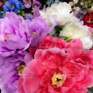 花畑のアップの写真・画像素材[922278]