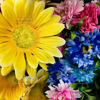 色鮮やかな花のアップの写真・画像素材[922279]