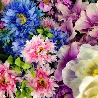 敷き詰められた花のアップの写真・画像素材[922280]