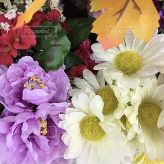 敷き詰められた花のアップの写真・画像素材[922281]