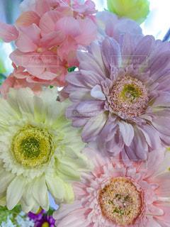 パステルカラーの花の写真・画像素材[925683]