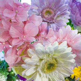 淡い色の花の写真・画像素材[925684]