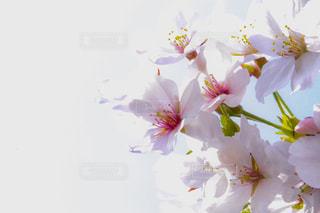 近くの花のアップの写真・画像素材[1111829]