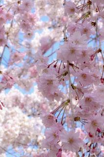 近くの花のアップ - No.1111833