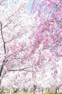 近くの木のアップの写真・画像素材[1111834]