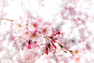 近くの花のアップの写真・画像素材[1111835]