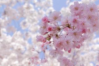 近くの花のアップの写真・画像素材[1111836]