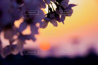 近くの花のアップの写真・画像素材[1111842]