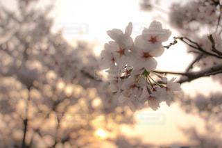 近くの花のアップの写真・画像素材[1111845]