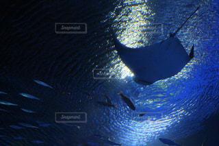 水面下を泳ぐ魚たちの写真・画像素材[1111863]