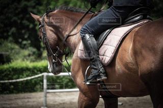 馬に乗る人の写真・画像素材[1192200]