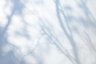 木漏れ日を映し出す壁の写真・画像素材[1805336]