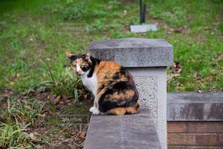 猫とレンガの写真・画像素材[923679]