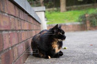 猫とレンガの写真・画像素材[923680]