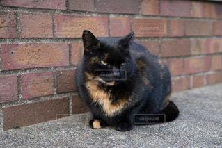 猫とレンガの写真・画像素材[923681]