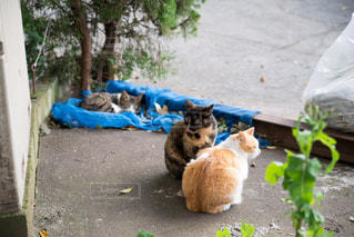 猫の集会の写真・画像素材[923682]