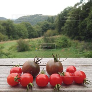 プチトマトの写真・画像素材[923700]