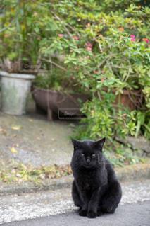 黒猫の写真・画像素材[931798]