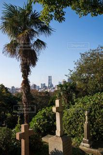 横浜外国人墓地 - No.931843