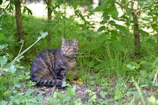 庭に座っている猫の写真・画像素材[949774]