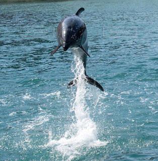 イルカの写真・画像素材[1048287]