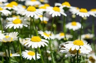 花の写真・画像素材[1278041]