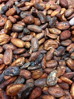 カカオ豆の写真・画像素材[1758404]