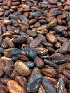 カカオ豆の写真・画像素材[1758406]