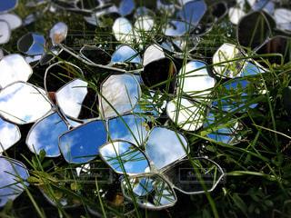 鏡の花の写真・画像素材[972165]
