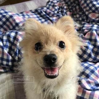 ベッドの上に座っている犬の写真・画像素材[922015]