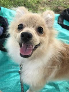 近くに犬のアップの写真・画像素材[922016]