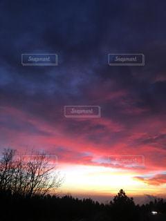 背景の夕日とツリーの写真・画像素材[1013636]