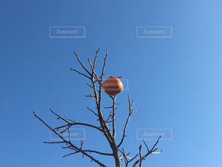 冬の空の写真・画像素材[922153]