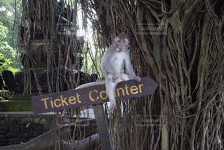 標識上に座っている猿の写真・画像素材[1652014]
