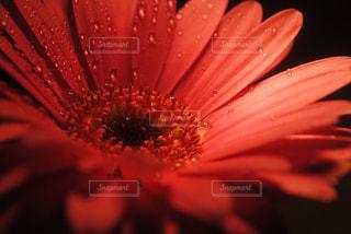 花のアップの写真・画像素材[922418]