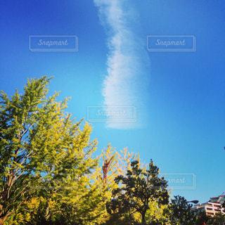 雲と木と空との写真・画像素材[922505]