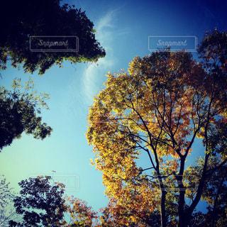 秋の空と樹との写真・画像素材[922506]