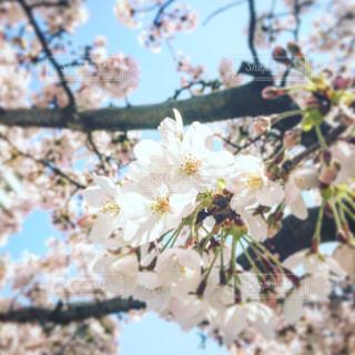 春真っ盛り - No.922916