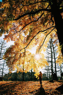フォレスト内のツリーの写真・画像素材[922927]